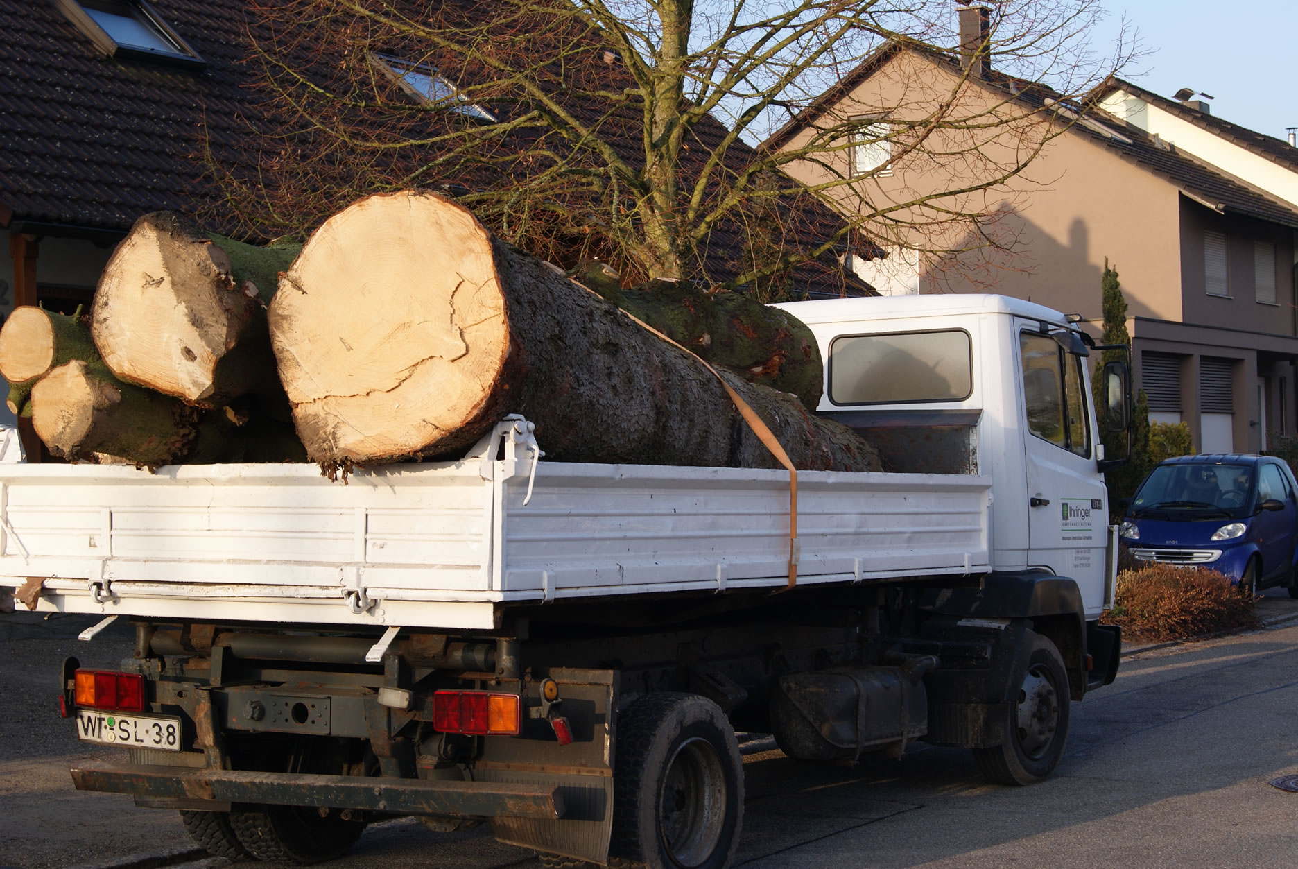 Holz-Abtransport